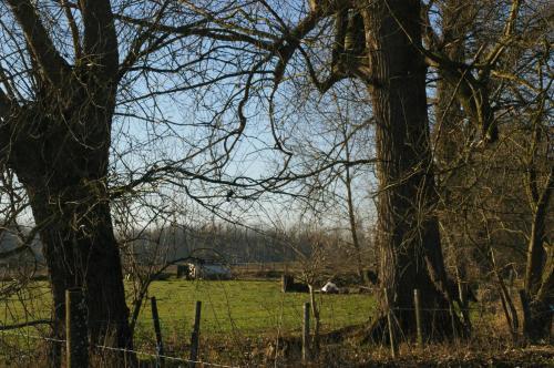 2019 Kapelle-op-den-Bos (46)