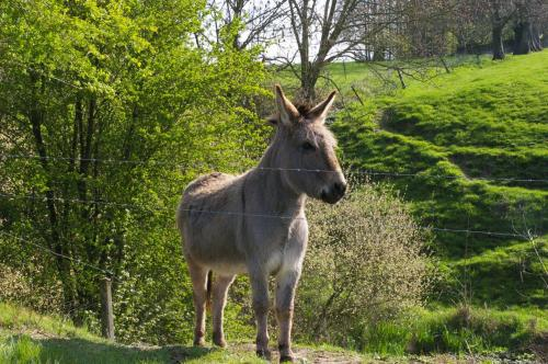 Hennuyères (75)
