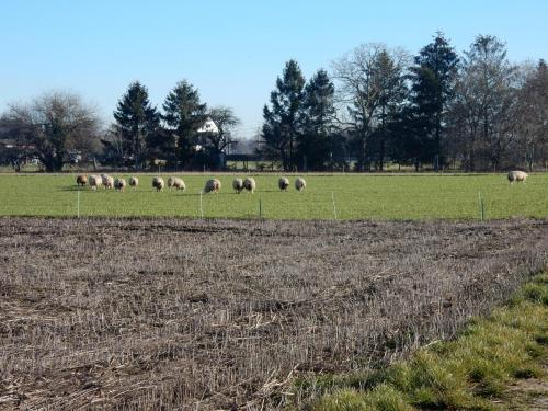2019 Kapelle-op-den-Bos (16)