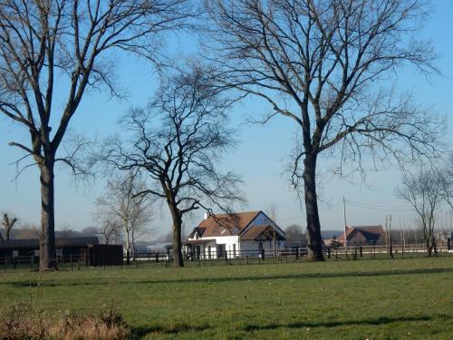 2019 Kapelle-op-den-Bos (7)