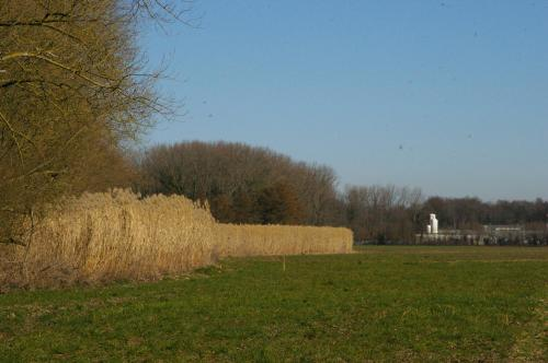 2019 Kapelle-op-den-Bos (71)