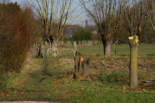 2019 Kapelle-op-den-Bos (84)